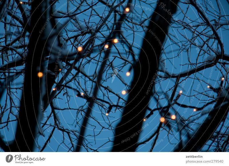 Lichterkette Himmel Weihnachten & Advent schön Baum dunkel Lampe Feste & Feiern Freizeit & Hobby Stern Dekoration & Verzierung gut Ast Weihnachtsbaum Zweig Entertainment Illumination
