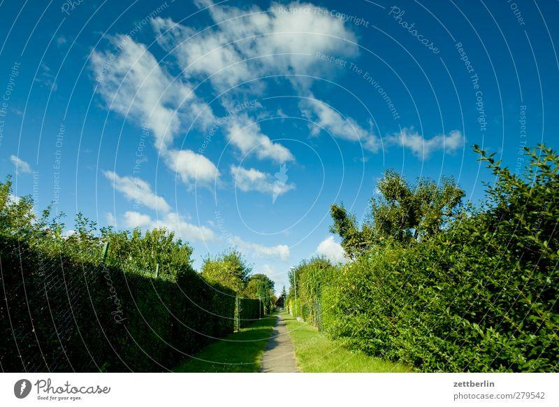 Hochsommer in der Kleingartenkolonie Himmel Natur schön Sommer Pflanze Baum Wolken Landschaft Umwelt Wege & Pfade Garten Park Wetter Klima Beginn Perspektive