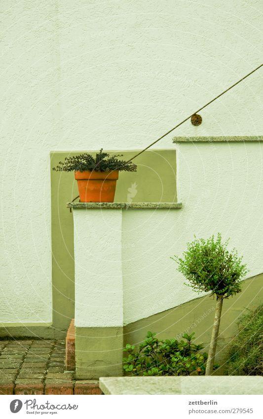 Treppe Häusliches Leben Wohnung Haus Innenarchitektur Dekoration & Verzierung Jahrmarkt Pflanze Baum Blatt Grünpflanze Nutzpflanze Kleinstadt Stadt Menschenleer