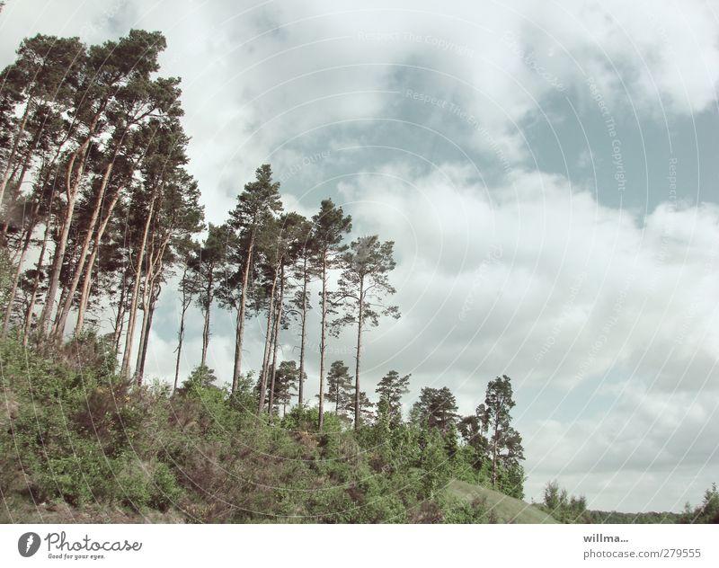 anne küste Himmel Natur Pflanze Baum Wolken Wald Landschaft frei Sträucher Berghang Kiefer Brandenburg Wäldchen