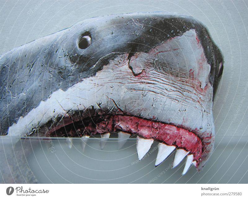Parodontose Tier Wildtier Haifisch Weisser Hai 1 Aggression bedrohlich grau rosa weiß Gefühle Kraft Angst Todesangst gefährlich Gebiss beißen Farbfoto