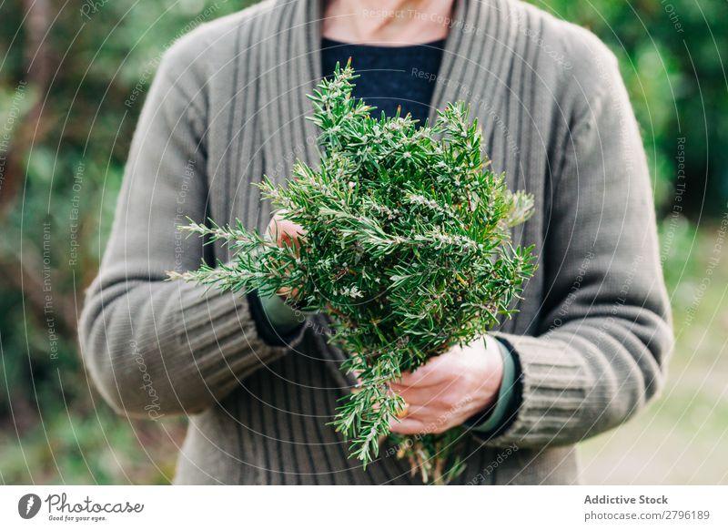 Kultivierungsfrau mit Rosmarinstrauß Frau Garten grün Natur Pflanze Kräuter & Gewürze Ernte