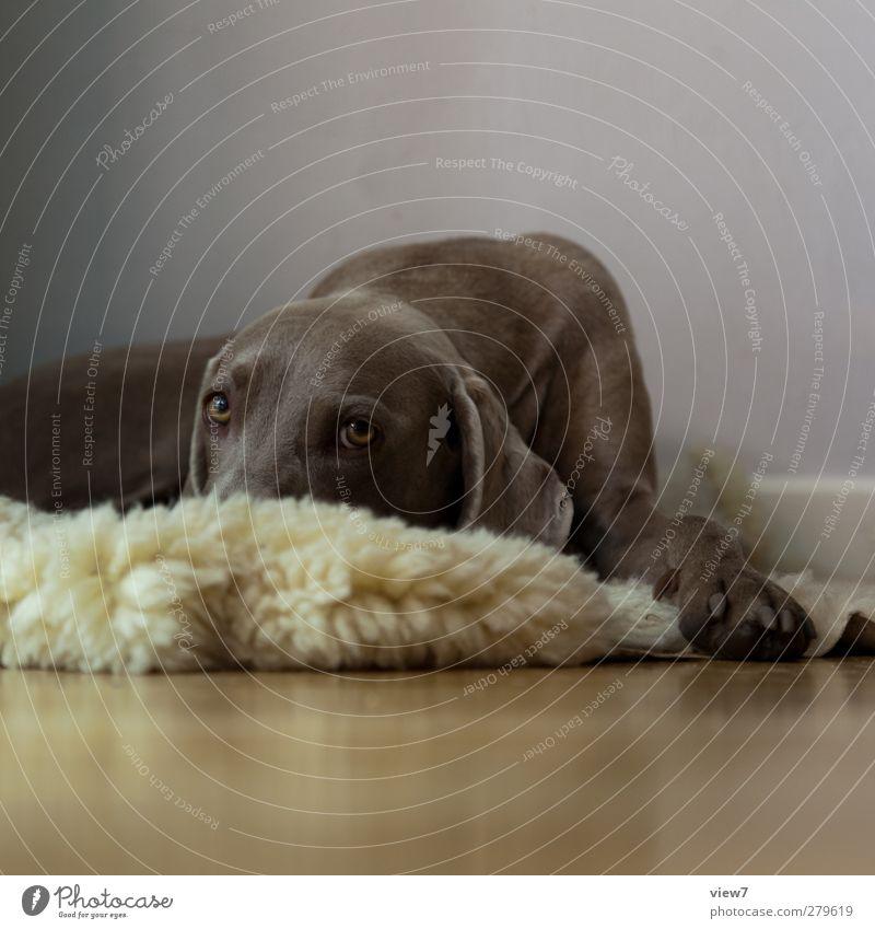 traurig. Hund Tier Erholung Innenarchitektur hell Stimmung braun Ordnung authentisch Beginn Dekoration & Verzierung Häusliches Leben schlafen