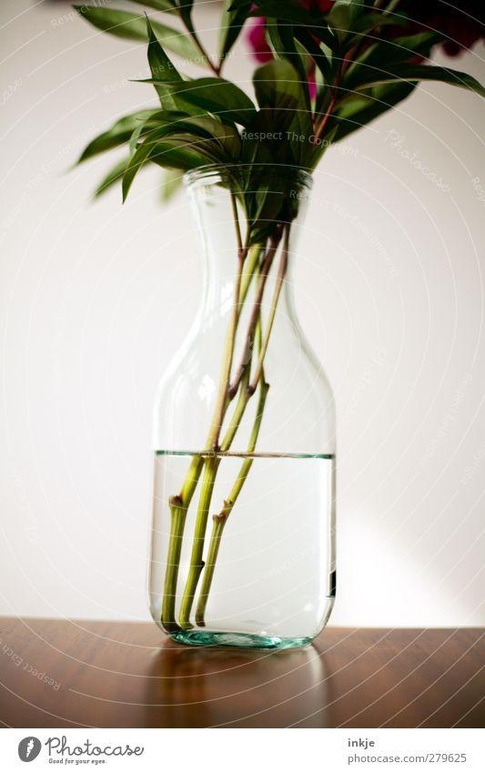 Wasser Stil Dekoration & Verzierung Tisch Blume Blumenstrauß Vase glasvase einfach Flüssigkeit kalt nass Klarheit Detailaufnahme Blütenstiel Glasflasche