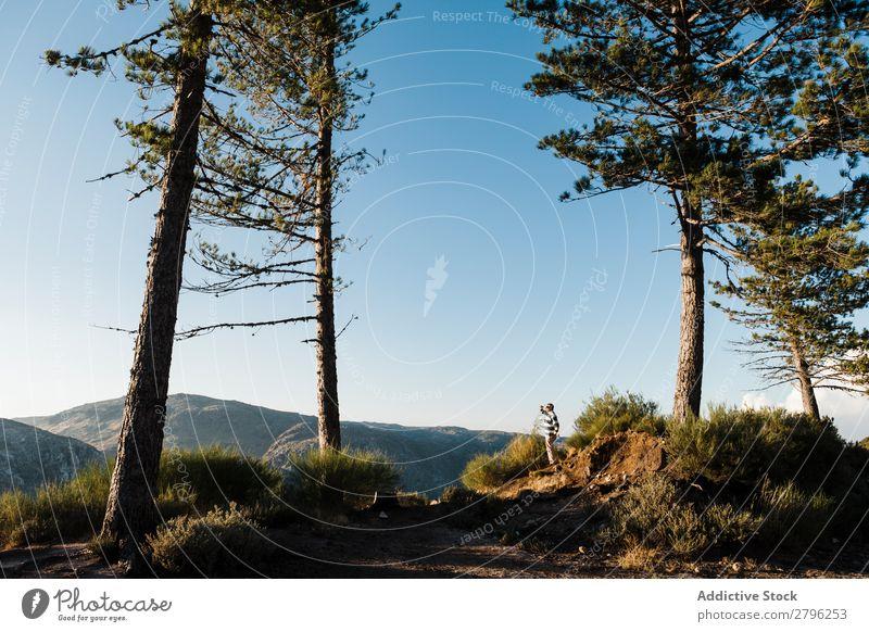 Mann steht auf einem Hügel zwischen Bäumen Berge u. Gebirge Baum Himmel Schönes Wetter Top Kiefer