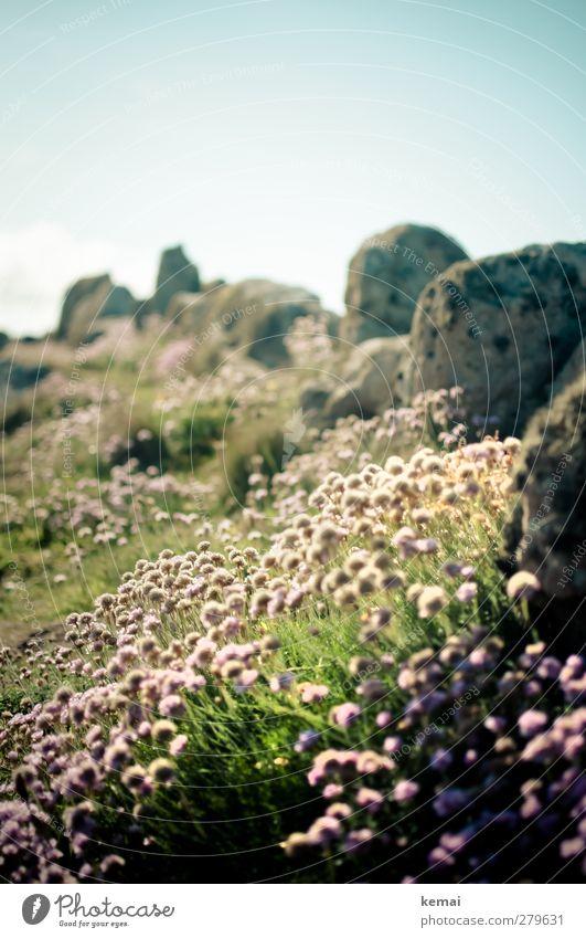 Land's End Flora Umwelt Natur Landschaft Pflanze Himmel Sonne Sommer Schönes Wetter Blume Gras Blüte Grünpflanze Wiese Felsen Küste Stein Blühend Wachstum