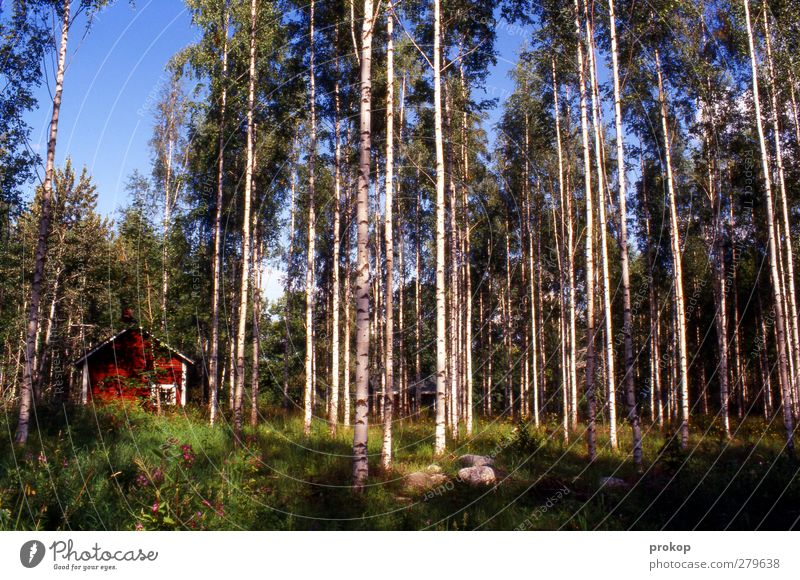 Nordisches Versteck Umwelt Natur Landschaft Pflanze Himmel Wolkenloser Himmel Wetter Schönes Wetter Baum Gras Wald Hütte frei ruhig Einsamkeit Schutz