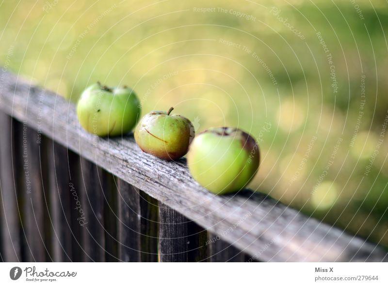 drei mal grün Lebensmittel Frucht Apfel Ernährung Bioprodukte Vegetarische Ernährung Sommer Herbst Garten frisch lecker saftig sauer Apfelernte Zaun Holzzaun