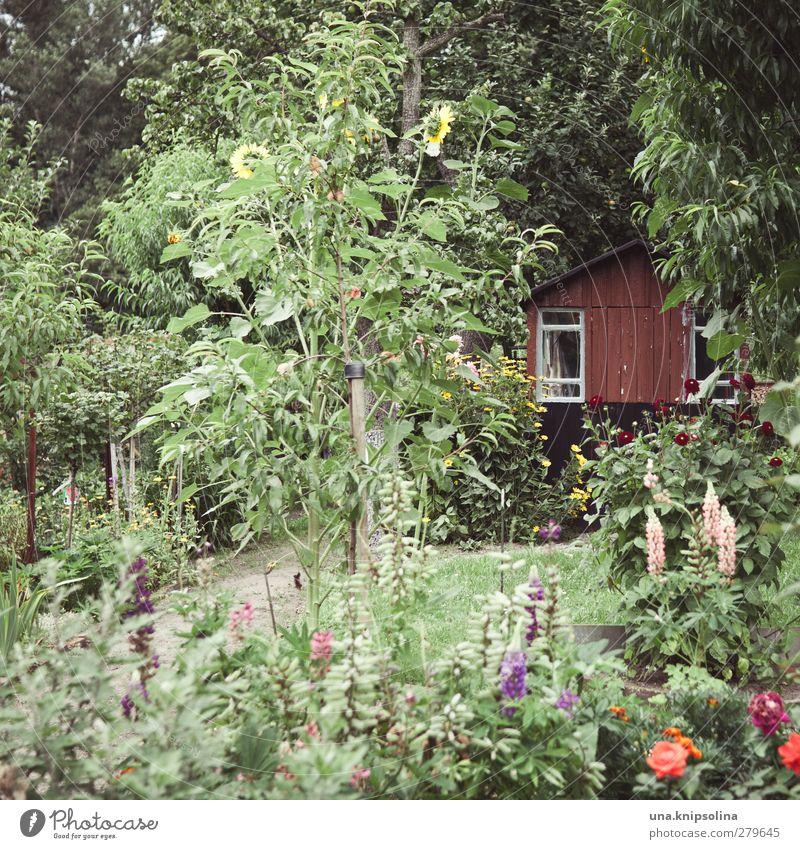 im grünen Natur Sommer Baum Blume ruhig Erholung Umwelt Garten natürlich Freizeit & Hobby wild Sträucher viele Hütte Schrebergarten
