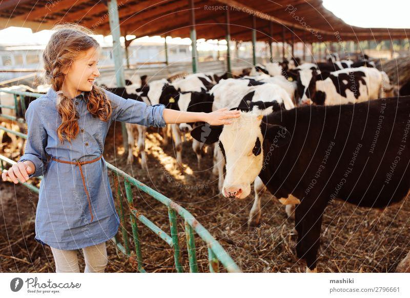 Kind Mädchen füttert Kalb auf der Kuhfarm. Lifestyle Ferien & Urlaub & Reisen Sommer Kindheit Umwelt Natur Landschaft Dorf Herde füttern authentisch