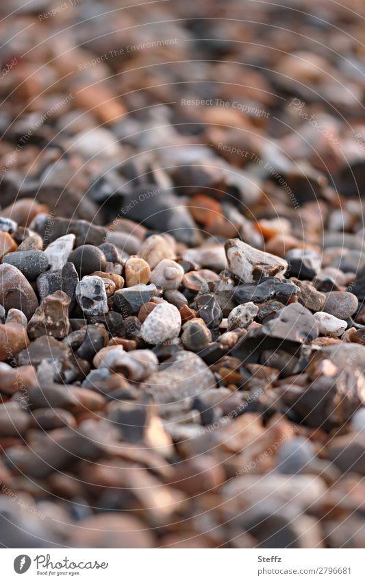 Strandsteine Umwelt Natur Steinstrand eckig natürlich schön viele braun achtsam Vielfältig Fundstück Strandgut Unschärfe beige Textfreiraum formatfüllend