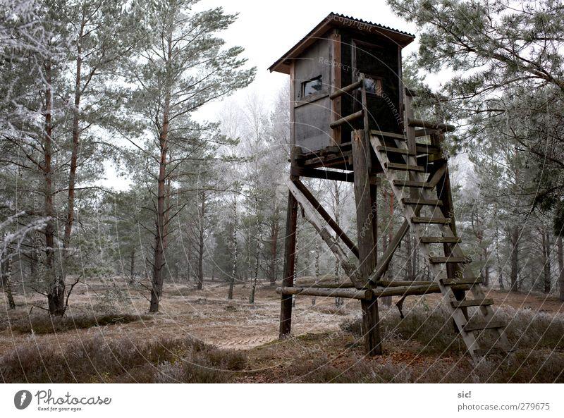 Hochsitz Natur grün Baum Einsamkeit Winter Wald kalt Wege & Pfade grau Eis Freizeit & Hobby wandern Frost Jagd Hochsitz Heide