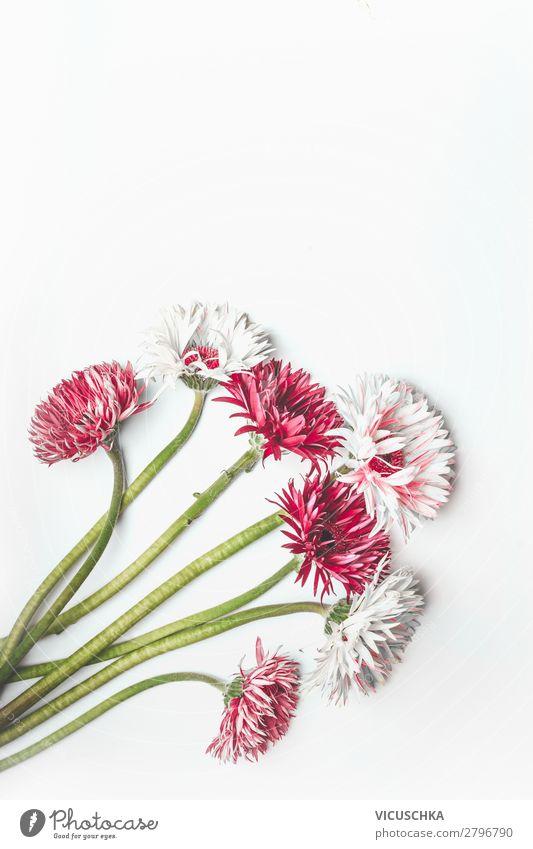 Roter und weißer Gerbera Bündel auf Weiß Stil Design Feste & Feiern Natur Pflanze Blume Blatt Blüte Dekoration & Verzierung Blumenstrauß rosa red white bunch