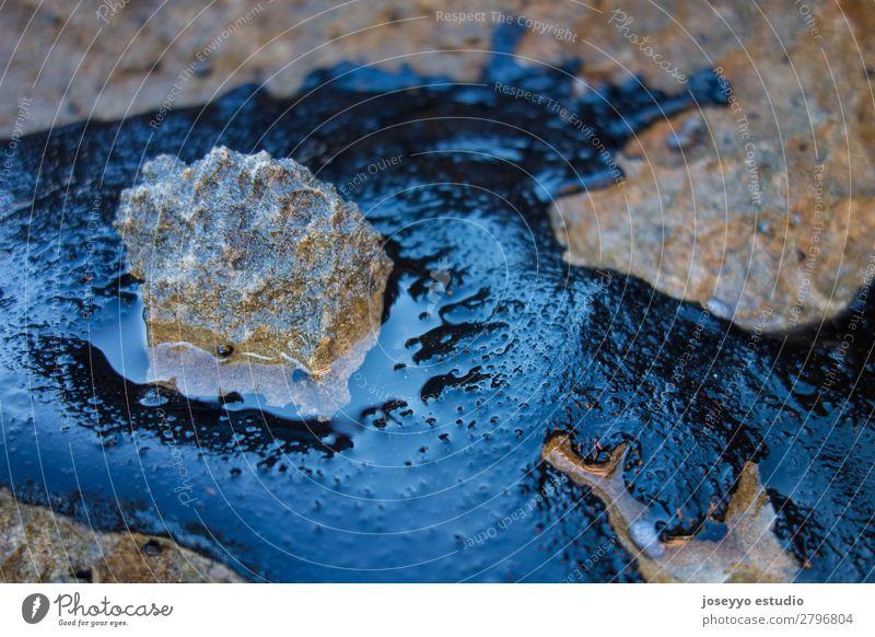 Rohölunfall auf einem Felsen am Strand Krankheit Industrie Umwelt Sand Küste Stein Erdöl dreckig schwarz Tod Desaster Energie Umweltverschmutzung Blob