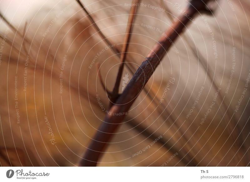 Ast Natur Pflanze rot Wald Winter Herbst natürlich Bewegung braun grau wild frei Wetter elegant ästhetisch authentisch