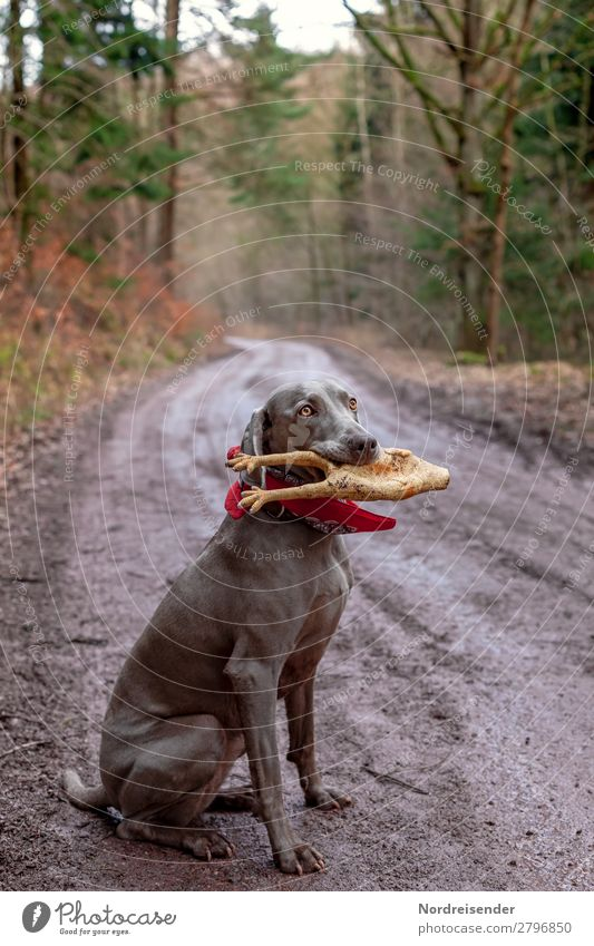 Jagdbeute Freizeit & Hobby Spielen Ausflug wandern Natur Landschaft Erde schlechtes Wetter Regen Baum Wald Straße Wege & Pfade Tier Haustier Hund nass