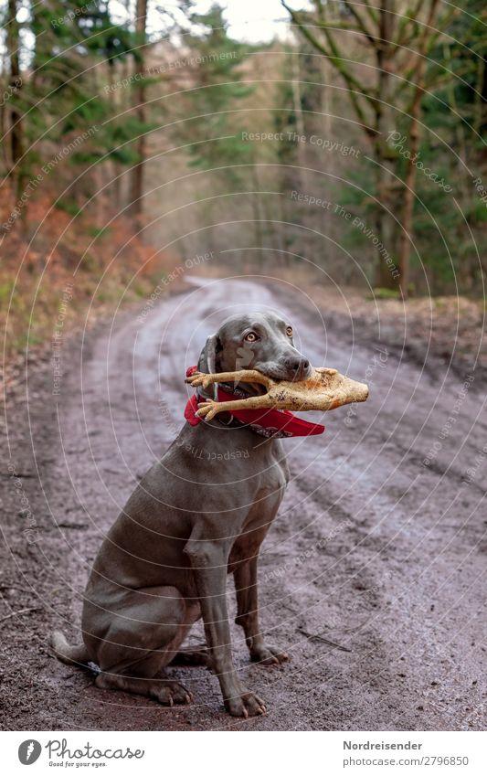 Jagdbeute Natur Hund Landschaft Baum Tier Wald Straße Wege & Pfade Spielen Ausflug Freizeit & Hobby Regen wandern Erde nass Fußweg