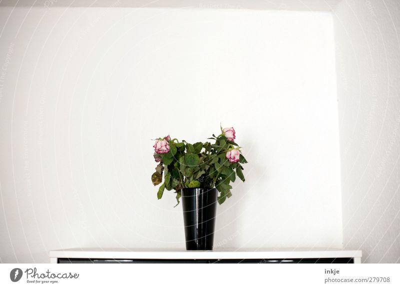 2 Wochen Urlaub sind nun vorbei. Häusliches Leben Dekoration & Verzierung Raum Zimmerecke Blume Rose Blumenstrauß Vase Blumenvase hängen stehen dehydrieren alt