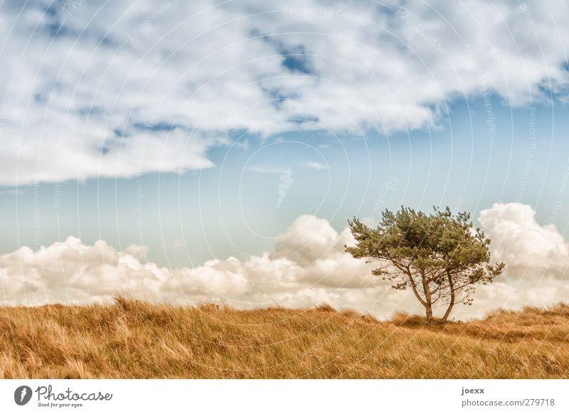 Guter Tag Natur Landschaft Himmel Wolken Horizont Sommer Schönes Wetter Wind Baum Feld blau braun grün weiß Idylle Umwelt Farbfoto Außenaufnahme Menschenleer