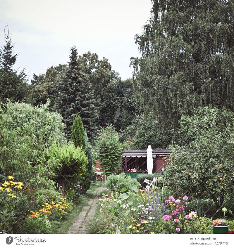 lücke Natur grün Baum Blume Umwelt Gras Garten natürlich Freizeit & Hobby Wachstum Häusliches Leben Sträucher viele Blühend Sonnenschirm Beet