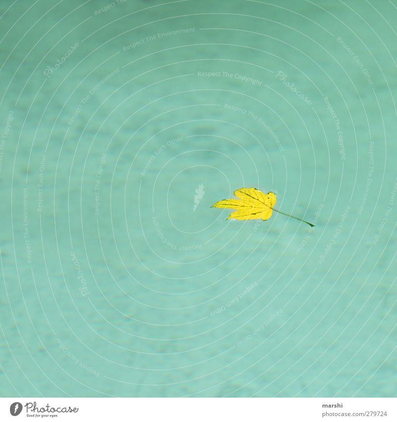 bald wird es Herbst Natur blau Wasser Sommer Pflanze Blatt gelb See einzeln Schwimmbad Textfreiraum Herbstlaub herbstlich