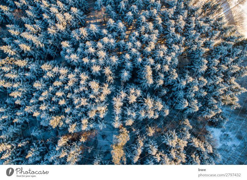 Wintertrees Ferien & Urlaub & Reisen Tourismus Abenteuer Ferne Schnee Winterurlaub Berge u. Gebirge wandern Umwelt Natur Landschaft Pflanze Frühling Klima