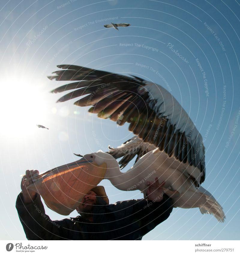 Meins Meins Meins! Mensch maskulin 1 Tier Wildtier Vogel fliegen füttern Appetit & Hunger Gier Fingerfood Fisch Pelikan Möwe Fressen flattern Flügel Schnabel