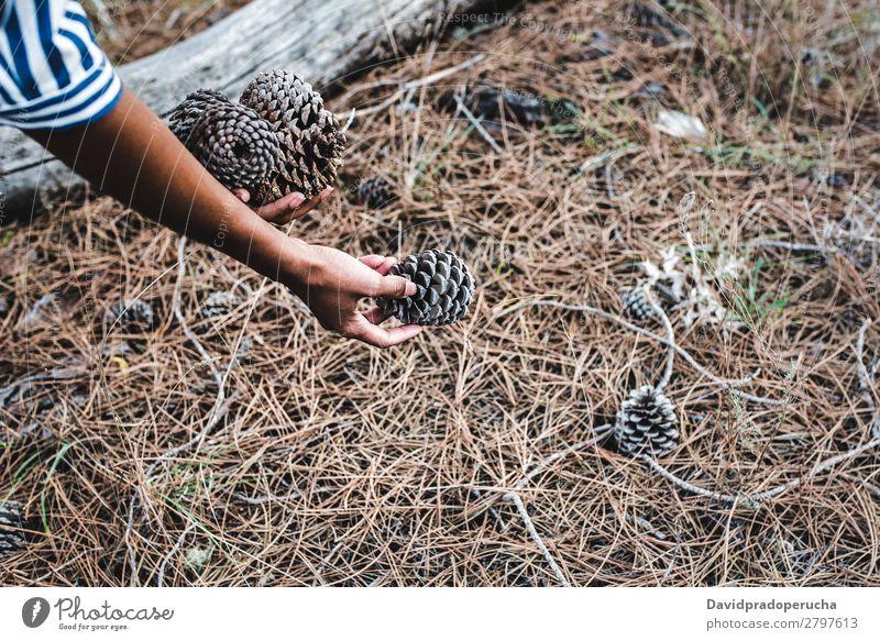 Frau, die Nadelbäume in der Nähe eines großen Baumstammes aufhebt. urwüchsig Kiefernzapfen Wald Konifere Holz schwarz Blatt regenarm Jahreszeiten Feldfrüchte