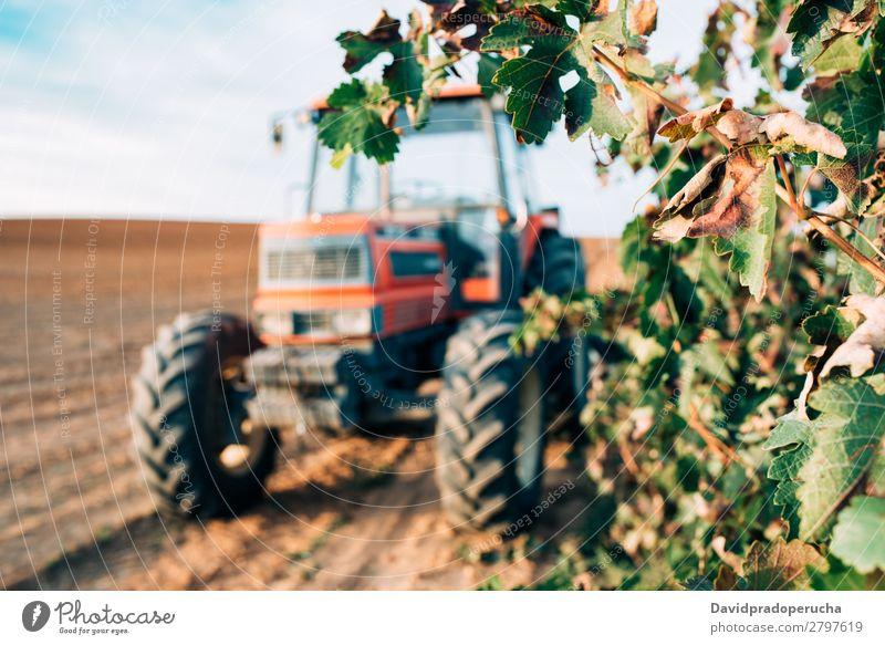 Traktor in einem Weinberg Maschine Verkehr Natur Feld Produktion Landwirtschaft ländlich Bauernhof Lokomotive Rad Weingut Ernte Sommer Hintergrundbild Himmel
