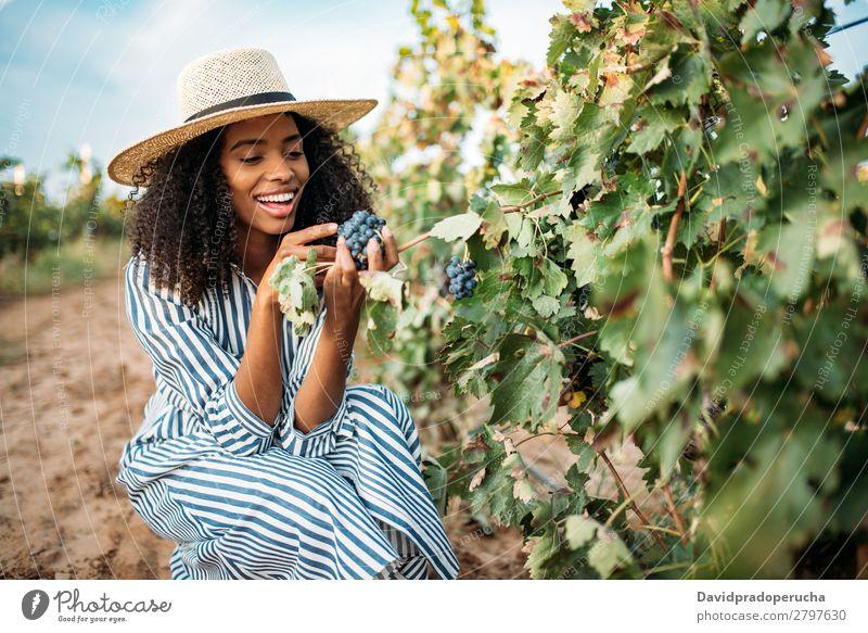 Junge schwarze Frau beim Essen einer Traube in einem Weinberg Weingut urwüchsig Weintrauben Lächeln horizontal organisch Afrikanisch Ernte Glück Landwirtschaft