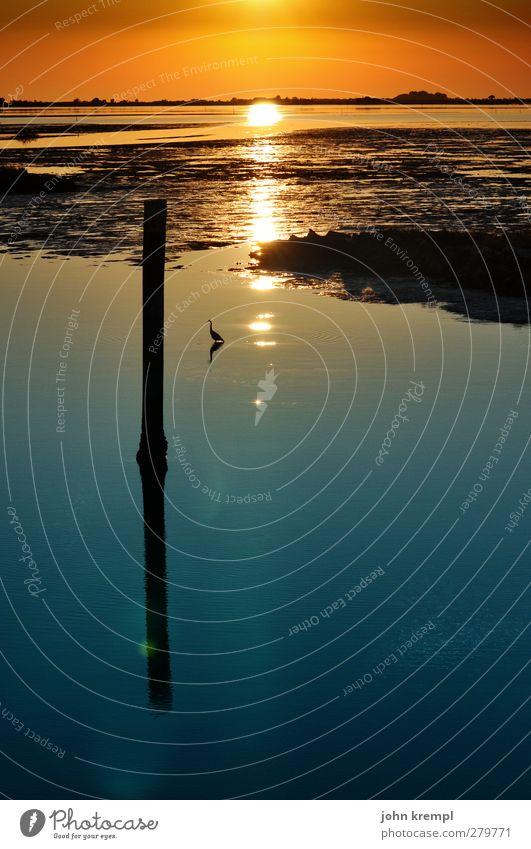 gute nacht Küste Meer seicht Sandbank Tier Vogel Reiher 1 Holzpfahl stehen Glück Kitsch positiv blau gelb gold orange Liebe Verliebtheit Romantik schön