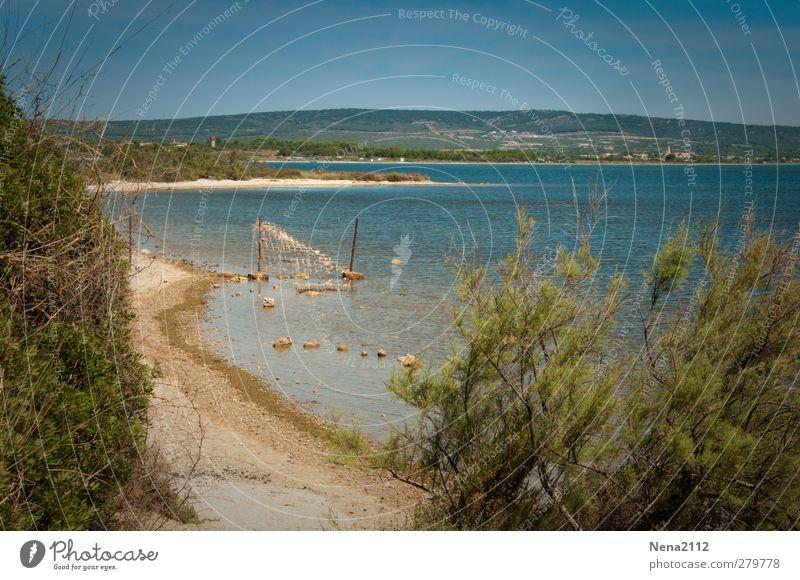 Blue(s) day... Umwelt Natur Landschaft Sand Wasser Himmel Wolkenloser Himmel Sonnenlicht Frühling Sommer Klima Schönes Wetter Baum Sträucher Strand Meer See