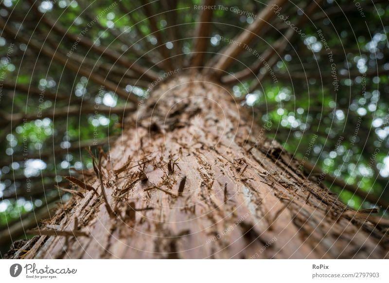 Himmelwärts im Wald Leben Sinnesorgane Erholung ruhig wandern Landwirtschaft Forstwirtschaft Handwerk Wissenschaften Umwelt Natur Pflanze Klimawandel Baum