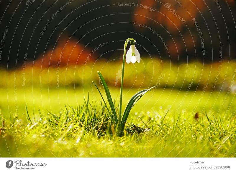 Ganz allein Natur Pflanze schön grün weiß Landschaft Blume Wärme Umwelt Frühling natürlich Wiese Gras Garten braun hell