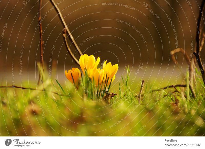 Hallo Frühling Natur Pflanze grün Landschaft Blume Wärme gelb Umwelt Blüte natürlich Wiese Garten braun hell Park