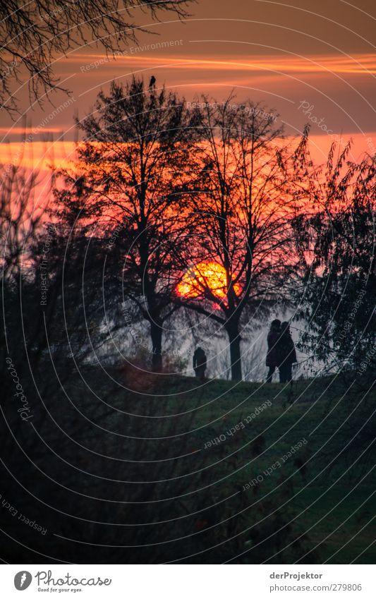 Sonnenuntergang Park Babelsberg im Spätherbst Natur Baum Erholung Landschaft Tier Freude Umwelt Gefühle Herbst Glück Stimmung Paar wandern beobachten entdecken
