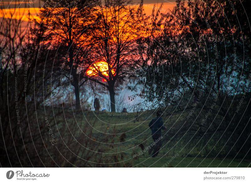 Sonnenuntergang Park Babelsberg im Spätherbst Querformat Natur Pflanze Baum Sonne Wald Landschaft Umwelt Wiese Sport Herbst Gefühle Garten Park wandern Fröhlichkeit Schönes Wetter