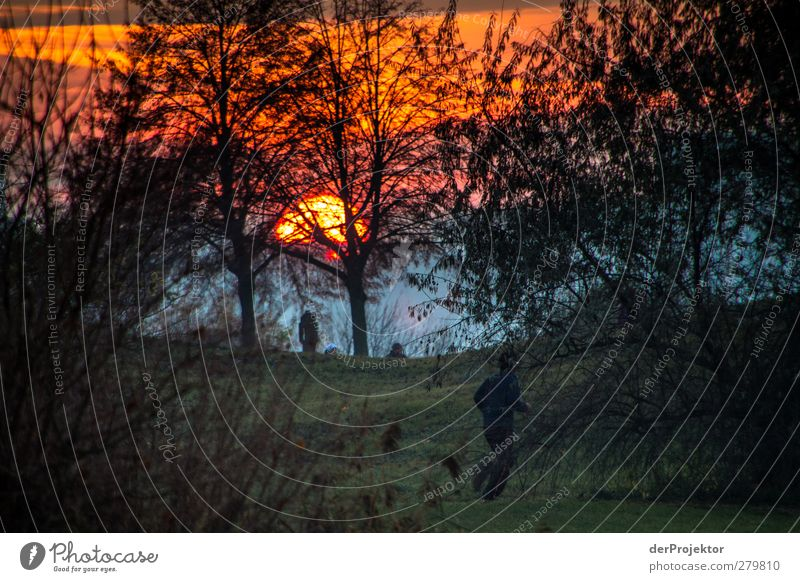 Sonnenuntergang Park Babelsberg im Spätherbst Querformat Sport Sportler Joggen wandern Umwelt Natur Landschaft Pflanze Sonnenaufgang Sonnenlicht Herbst