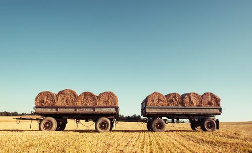 Anhängliche Erntehelfer Getreide Sommer Landwirtschaft Forstwirtschaft Umwelt Natur Landschaft Himmel Horizont Schönes Wetter Wärme Nutzpflanze Feld Anhänger