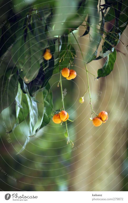 beerig Natur Pflanze grün Sommer Erholung Blatt Wald gelb Traurigkeit Frühling Gefühle Herbst Garten Stimmung Park orange