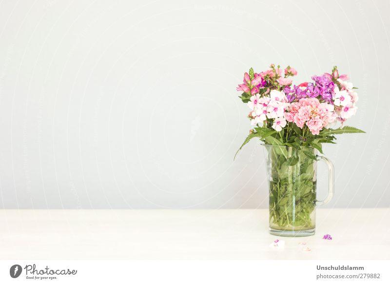 Susis Gartengrüße Pflanze grün Farbe Sommer weiß Blume Blüte Frühling Stil grau Lifestyle hell rosa Wohnung Häusliches Leben