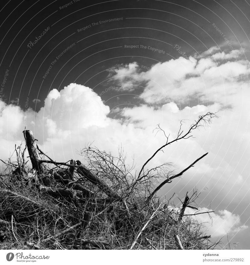nach dir ... Himmel Natur Baum Einsamkeit ruhig Umwelt Tod Traurigkeit Klima Zukunft Schönes Wetter Wandel & Veränderung Vergänglichkeit Hügel Ende