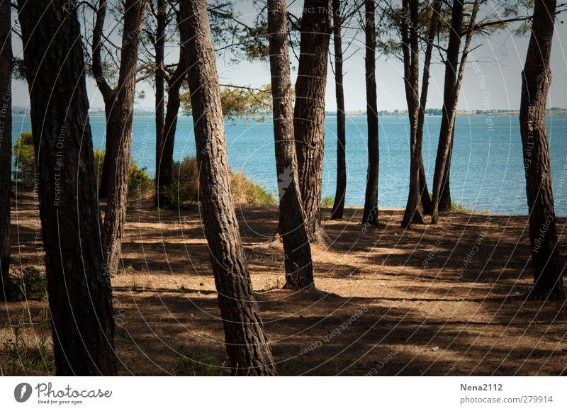 Zikadenwohnheim Himmel Natur blau Wasser Sommer Baum ruhig Landschaft Wald Erholung Umwelt Wärme Küste Sand See braun