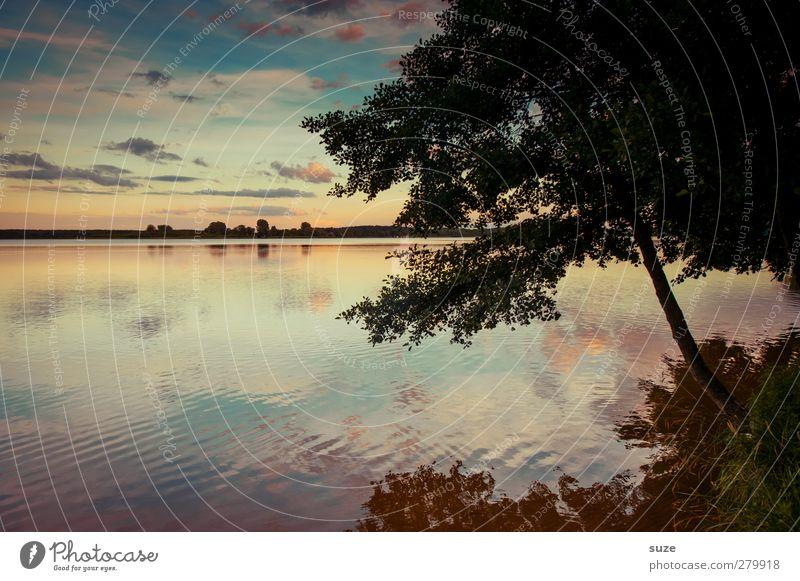 Still ruht der See ruhig Umwelt Natur Landschaft Urelemente Wasser Himmel Wolken Horizont Sommer Schönes Wetter Baum Wiese Seeufer authentisch dunkel natürlich