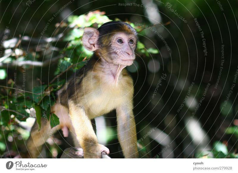 Blick in die Zukunft maskulin Tier Tiergesicht 1 Tierjunges beobachten entdecken träumen Wachstum Ferne Unendlichkeit Neugier niedlich Vertrauen Hoffnung
