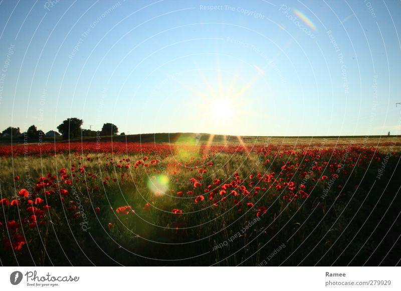 Mohnfeld Natur blau grün Sommer Pflanze rot Sonne Landschaft Erholung Wärme Glück Luft Feld glänzend Zufriedenheit ästhetisch
