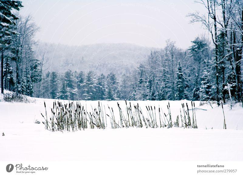 Natur weiß schön Pflanze Baum Wolken Winter Landschaft Wald Schnee Frost Beautyfotografie Jahreszeiten Unwetter Botanik ländlich