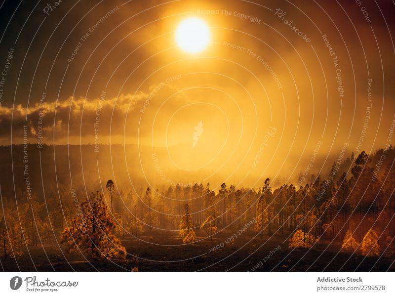 Brennende Wälder in hellem Sonnenlicht Wald brennend Rauch Gold Flamme Panorama (Bildformat) Risiko Umwelt heizen Baum Himmel Feuer Tod ökologisch Natur