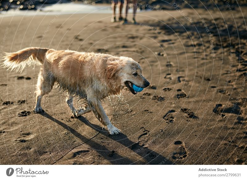 Hunde, die in der Nähe des wogenden Meeres laufen. Strand Spielen Sonnenlicht rennen Sand