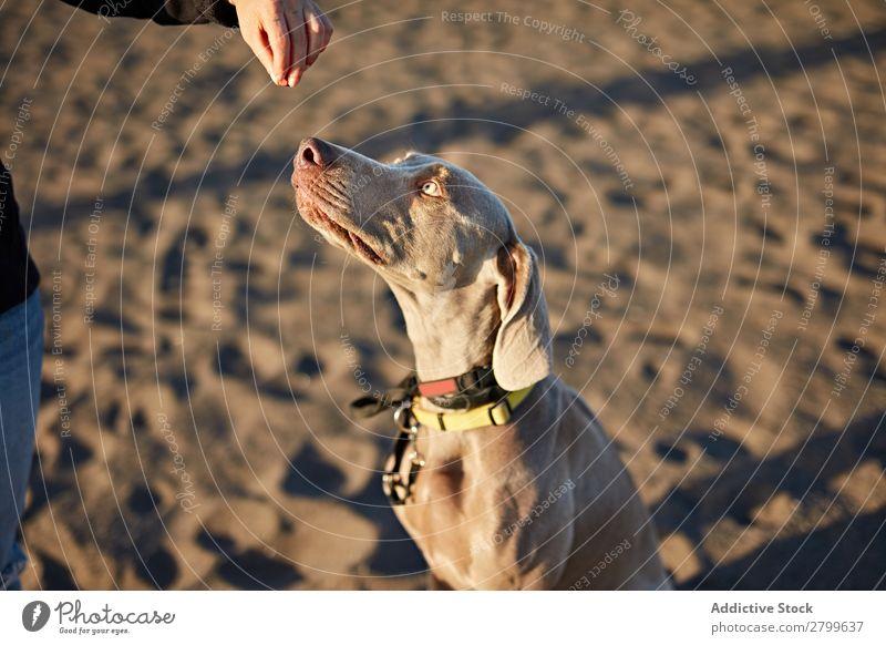 Lustiger Hund am Strand Sand atmen lustig Sonnenstrahlen Tag Haustier Natur Sommer Tier Glück Freude Menschenleer heimisch Reinrassig niedlich lieblich Küste